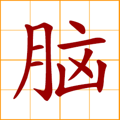 simplified Chinese symbol: brain