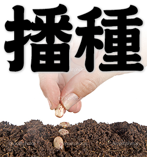 sowing, seeding; spread or plant seeds