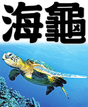 sea turtle, marine turtle