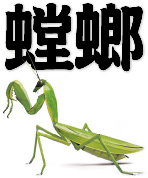mantis, praying mantis