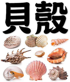 shell, seashell, cowrie, conch